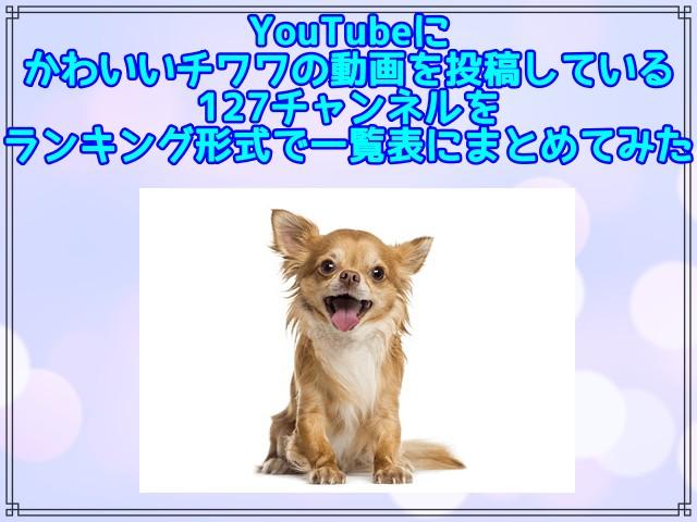 【2021最新版】YouTubeにかわいいチワワの動画を投稿している127チャンネルをランキング形式で一覧表にまとめてみた