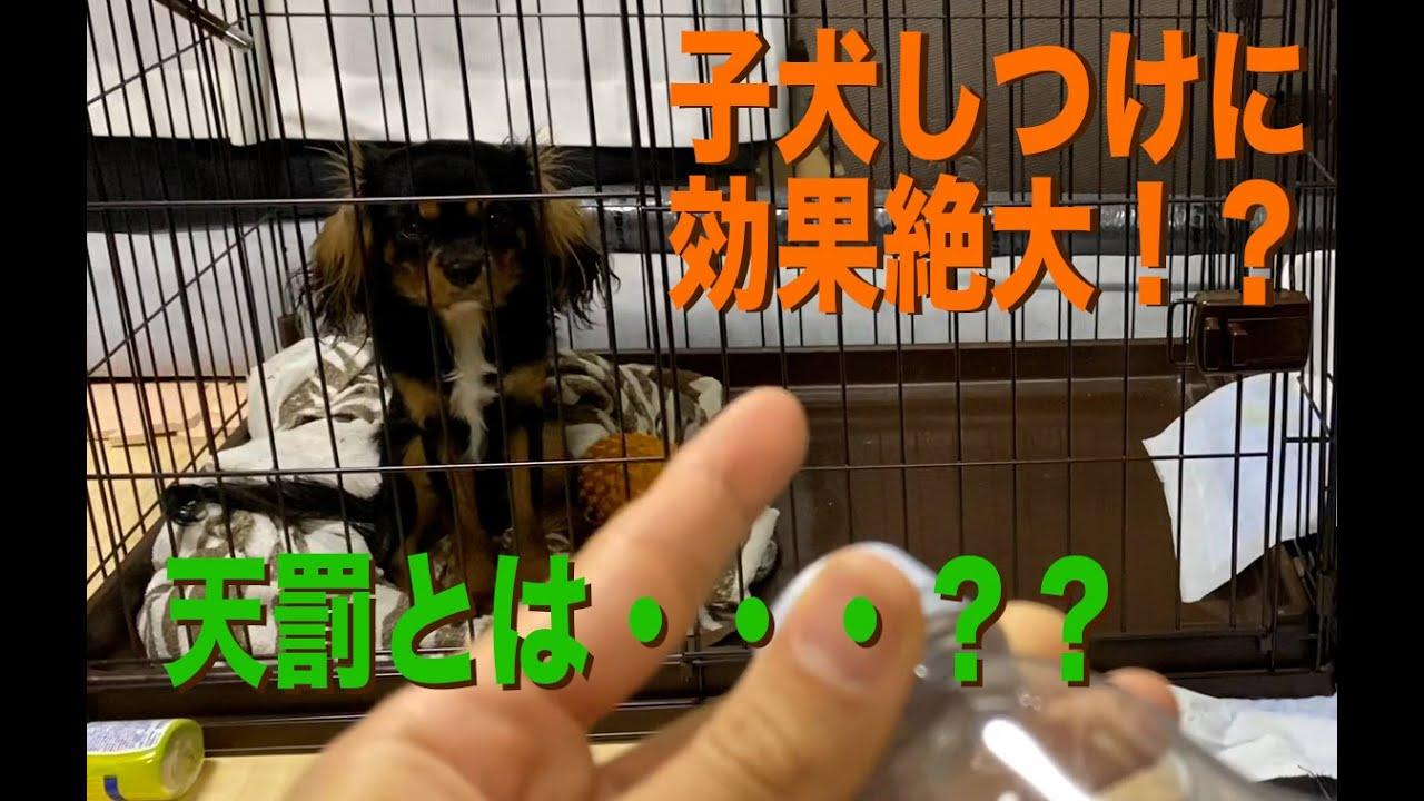 【動画】子犬のしつけに超効果的!「天罰方式」とは??