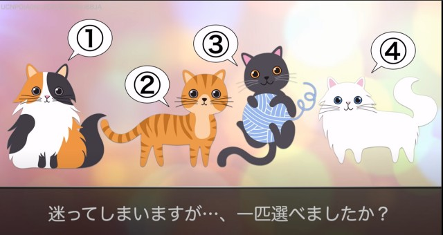 4種類の猫の画像