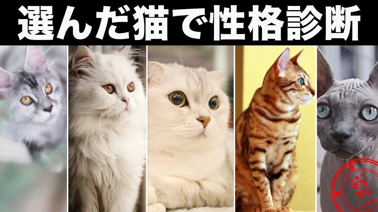 【猫を使った心理テスト動画まとめ10選】でわかるあなたの性格や深層心理とは?